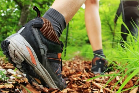 While enjoying the accommodation at Fernleigh Lodge try hiking.