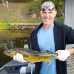 Here's a large Walleye-Pickerel caught at Fernleigh Lodge, 2017.