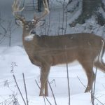 A Nice Buck Just Outside Our Window!