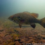 Kashwakamak Lake - The Perfect Habitat for Bass.